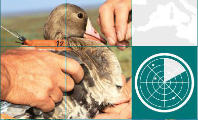 Invitation to join a global animal observation network