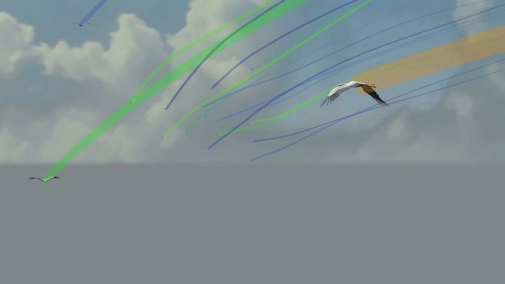 <span>GPS data visualization of 27 stork travelling between two thermals from the point of view of a follower. The flight path of each bird is color-coded based on its overall flapping activity from blue (low) to orange (high). Followers benefit from the thermal exploration of the leaders ahead, but spend more time in energetically costly flapping flight to keep up with the flock.</span>