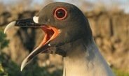 Lunar cycle determines hunting behaviour of nocturnal gulls